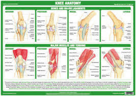 Details About Knee Joint Anatomy Poster Human Body Medical Educational Chart