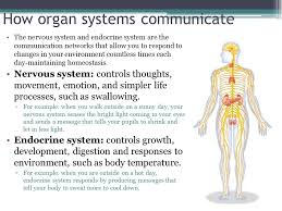 Central Nervous System Vs Peripheral Nervous System Venn Diagram Nervous System H Biology Section 29 1 Students Will Be Able To