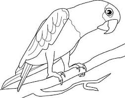 Small Picture Big Parrot Coloring Page Download Print Online Coloring Pages