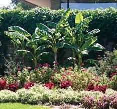Small Picture Best Ideas About Book Garden Edible Design Edible garden