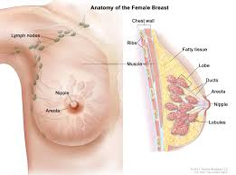 Woman s breast picture