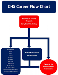 Science Related Chart Career Flow Chart School Of Sociology