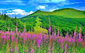 We have a massive amount of hd images that will make your. Beautiful Nature Spring Wallpapers Wallpaper Cave