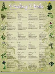 Culinary Herbs Archives