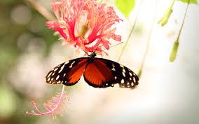 Butterfly on a Flower wallpaper ...