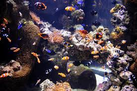 Image result for call the aquarium cleaning company