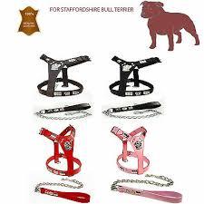 Staffy Colour Chart Friendly Green Bull Terrier Dog Harness Or Short Standard