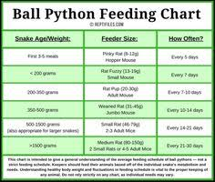 46 Up To Date Snake Food Size Chart