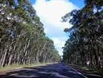 imagem de Pinhal Rio Grande do Sul n-15