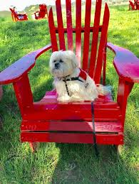 little dog in big red chair wilbur likes this red chair he always runs to it jumps up and takes a nap in it