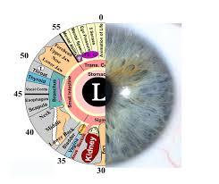 What Is Iridology Chart Iridology Assessments Gold Coast For Weight Loss