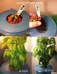 #Hydroponic Basil DIY