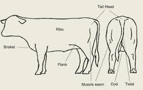Live Assessing To Meet Market Specifications Futurebeef