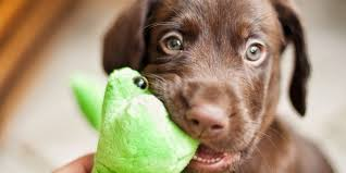 Find your favorite food and enjoy your meal. 120 Cute Brown Dog Names For Your Chocolate Colored Pup Daily Paws