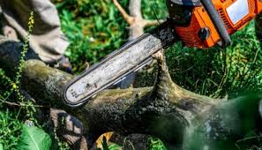 Top 5 Things to Consider When Hiring A Tree Removal Company - News Verve