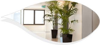office indoor plants. Best Indoor Plants For Office