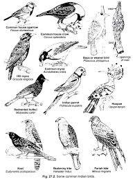 essay on the birds of vertebrates chordata zoology some common n birds