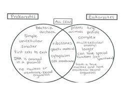 Compare Prokaryotic And Eukaryotic Cells Venn Diagram Cells Venn Diagram Prokaryotic Eukaryotic With Answer Key