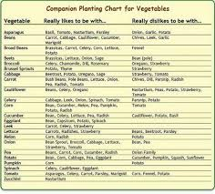 Vegetable Companion Planting Charts Vegetable Garden Companion Planting Companion Planting Chart