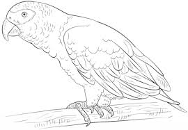 Small Picture African Grey Parrot coloring page Free Printable Coloring Pages