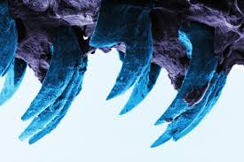 Limpets Sink Their Teeth In – National Geographic Education Blog