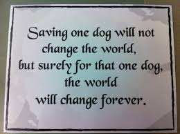 Adoption Quotes Gorgeous Quotes About Pet Adoption 48 Quotes