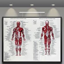 Details About Muscle System Poster Silk Fabric Cloth Anatomy Chart Human Body Educational Home