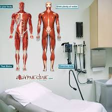 Anterior And Posterior Muscular System Anatomy Dry Erase Sticky Wall Chart