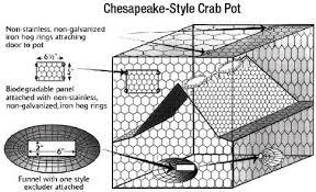 Crab Size Chart Nj Shellfish Crab Information New Jersey Saltwater Fishing
