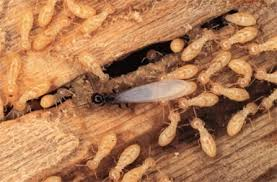 Image result for Pest Control Tips To Help You Keep The Termites Away