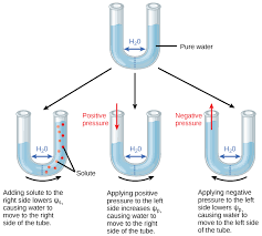 Water Potential Equation Water Potential Biology For Majors Ii