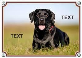 Hundeschilder Boxenschilder Und Autoaufkleber Selbst Gestalten 1a