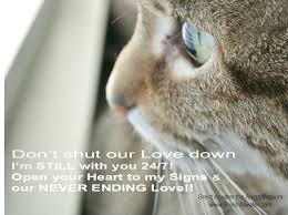 Loss Of A Cat Quotes Awesome Emotional Shut Down When Pet Dies Pet Grief Loss Of A Pet Quotes W