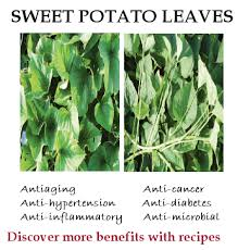 sweet potato leaves nutrition benefits recipes