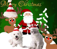 Dogs <b>Pet</b> Puppy <b>Christmas Santa</b> Party Warm Winter Autumn ...