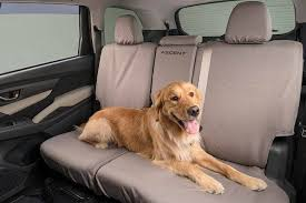 dog friendly subaru ascent