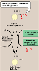 chapter anti inflammatory drugs essay medicine and health  figure 41 7 metabolism of aspirin and acetylation of cyclooxygenase by aspirin