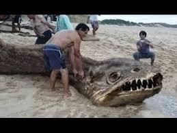 sea monster found 2014. Contemporary Sea Inside Sea Monster Found 2014 I