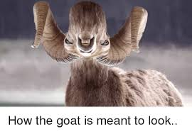 funny goat and how how the goat is meant to look