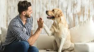 Resultado de imagen para perros y humanos