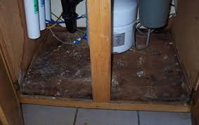 under kitchen sink cabinet. Black Mold Under Kitchen Sink Cabinet