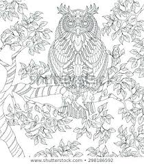 Owl Coloring Page Hand Drawn Owl Coloring Page Barn Owl Coloring