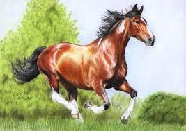 horse drawing in color.  Drawing Horse Drawing In Color  Google Search And Horse Drawing In Color W