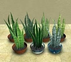 Succulent Size Chart Flower Pot Sizes Floridaoranges Co