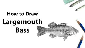 bass fish drawing step by step. Fine Step For Bass Fish Drawing Step By S