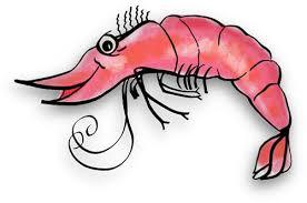 cooked shrimp clip art. Fine Clip Cooked Shrimp Clipart Free Gifs Throughout Clip Art