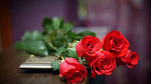 backgrounds red rose images collection on cute roses wallpaper high