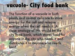 Cell City Analogy Examples Animal Cell Compared To A City By Janelisanchez18
