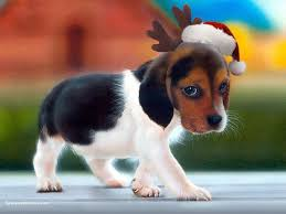 christmas puppy wallpaper viewing gallery