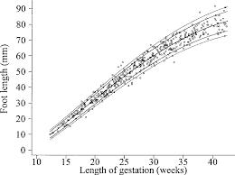 Figure 7 From Charts Of Fetal Size Limb Bones Semantic